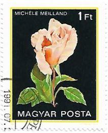 Selo Rosa Michele Meilland