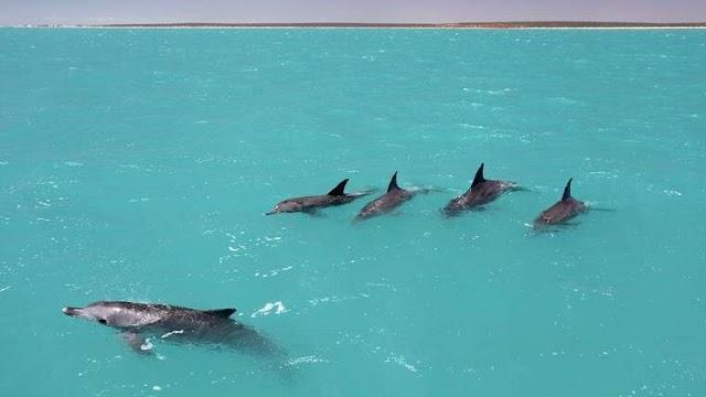 Τα δελφίνια μαθαίνουν τα «ονόματα» των φίλων τους για να σχηματίσουν ομάδες