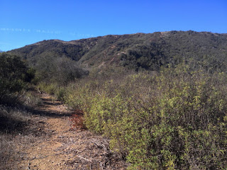 View southwest approaching saddle and old 2N28 on the east ridge en route to Summit 2843, Angeles National Forest