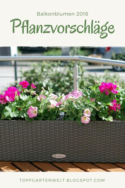 Balkonblumen 2018 - ein Traum in rosa, pink und weiß - Gartenblog Topfgartenwelt #topfgarten #balkonblumen #gartengestaltung #sommerblumen #pelargonien #geranien #surfinien #petunien #verbenen
