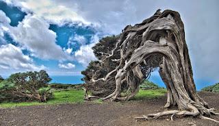 Pohon Unik El Arbol de la Sabina Sepanyol