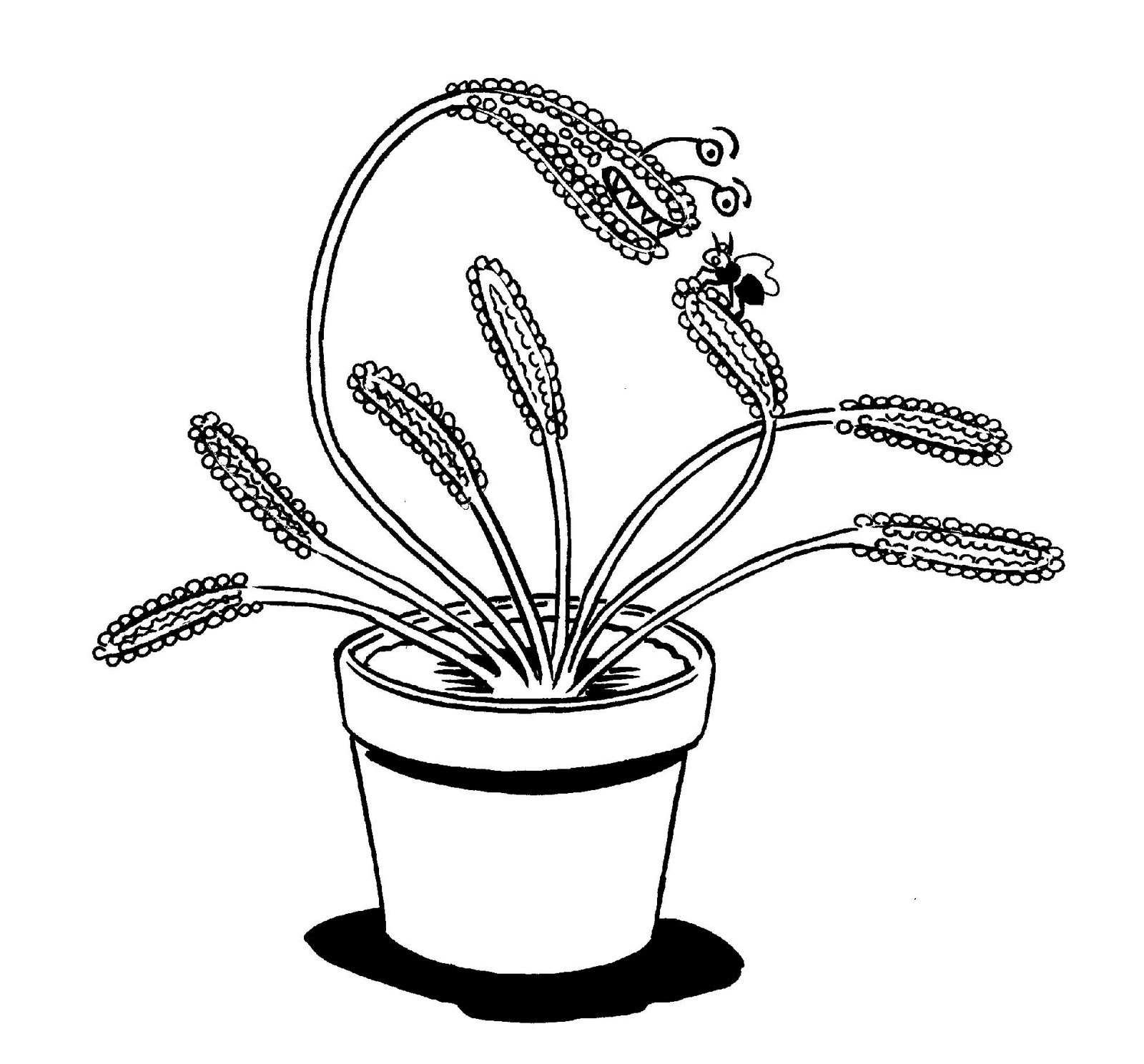 Carnivorous Plants Coloring Pages Coloring Pages