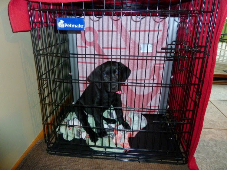 Getting your home organized with a puppy :: OrganizingMadeFun.com