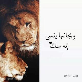 صور اسد