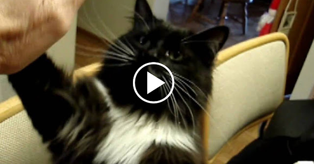 Have You Ever Seen A Cat Do Anything Like This Before?