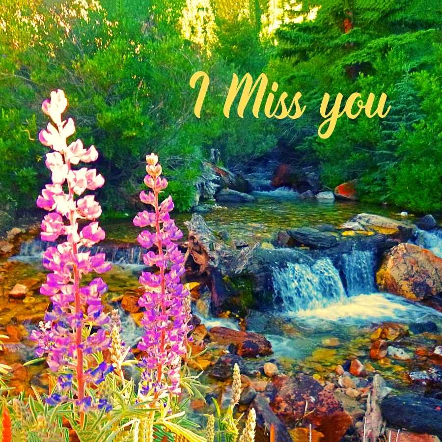 download miss you images