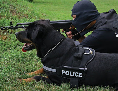 Rottweiler / French Police