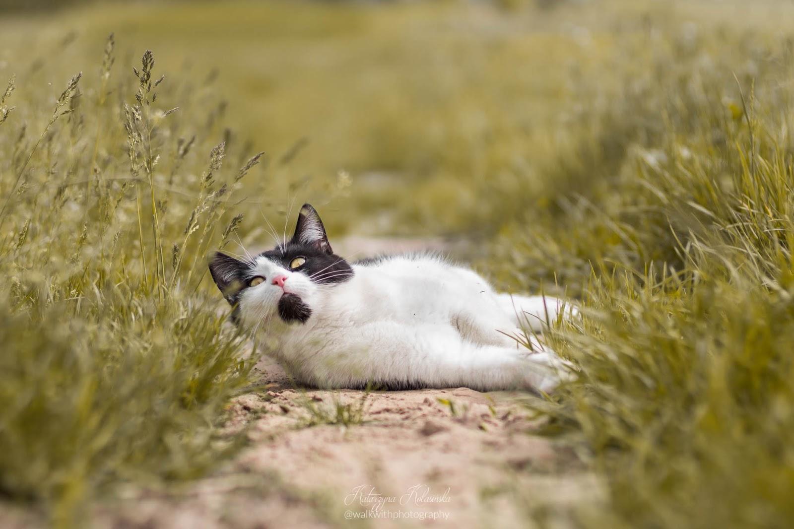 uroczy kot wyleguje się na łące