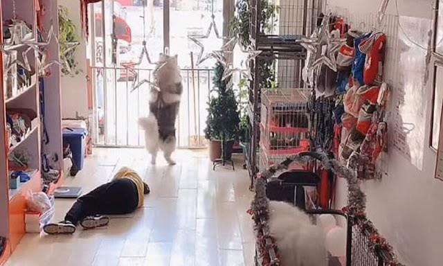 Собака спасла сотрудницу магазина, позвав на помощь людей