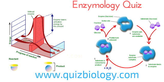 Enzymology Quiz