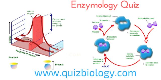 Enzymology Quiz