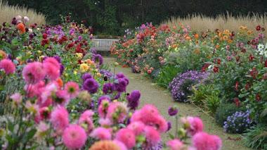 10 (o más) jardines para disfrutar de las dalias