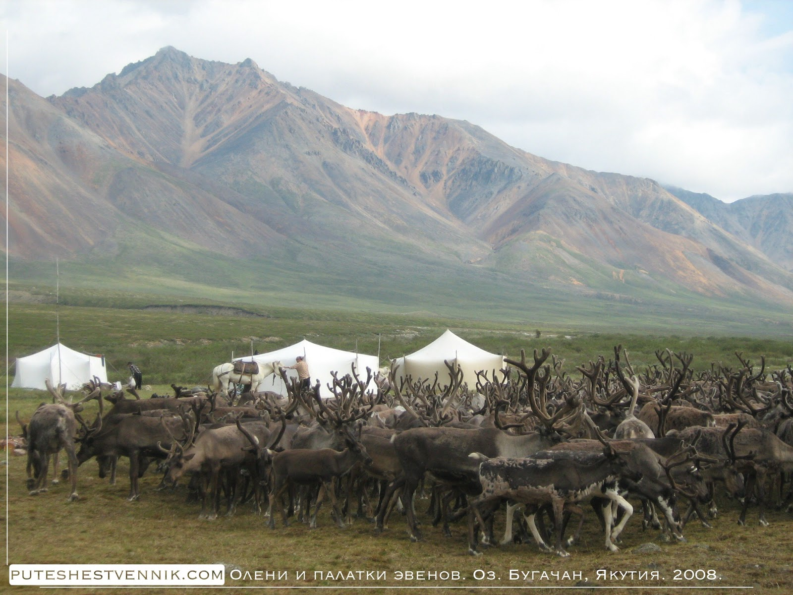 Олени и палатки эвенов