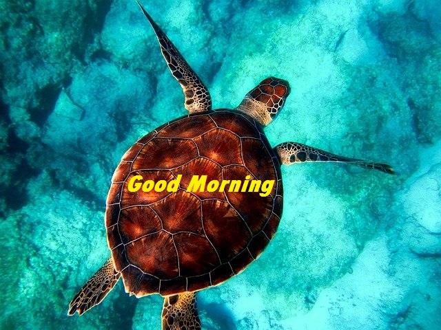 good morning nature hd