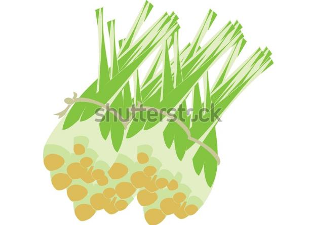 illustration tutorial citronella