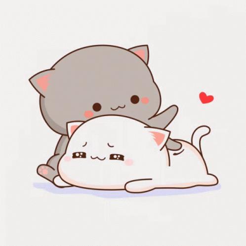 Hình avatar mèo cute