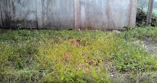 manfaat kelinci ternak umbaran