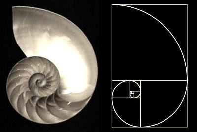 Espiral áurea en una concha de nautilus