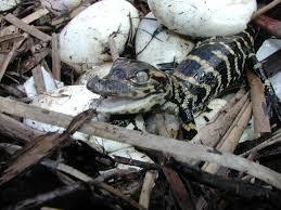 Zoologia | Reptilia