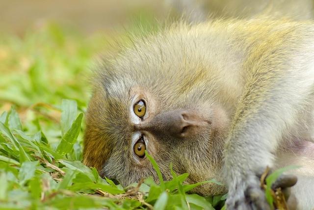 Detectan la viruela del mono en China y EEUU