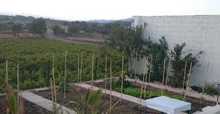 Köksträdgård under konstruktion.