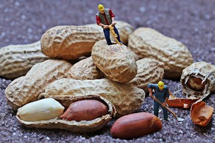 9 Manfaat Kacang Tanah Untuk Ibu Hamil Berikut Kandungan Nutrisinya