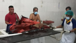 Tertabrak KA di Pelintasan Aksara, Seorang Warga Pukat Banting IV Tewas Mengenaskan