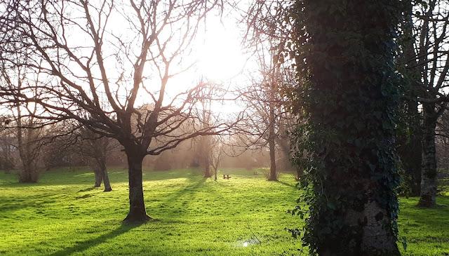 muuttaminen, ulkosuomalainen, muutto toiseen maahan, muuton valmistelu, lähdon valmistelu, puisto, puistonpenkki, tralee townpark, ireland