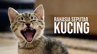 kucing,kucing persia,kucing anggora,kucing lucu,kucing himalaya,kucing hutan,kucing siam,kucing oren,kucing kampung,kucing imut,kucing bengal