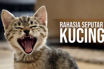 Kucing dan Rahasia Uniknya Yang Harus Kamu Ketahui | Hot Info