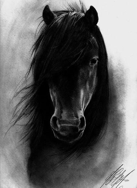 Animal Species Black Horse