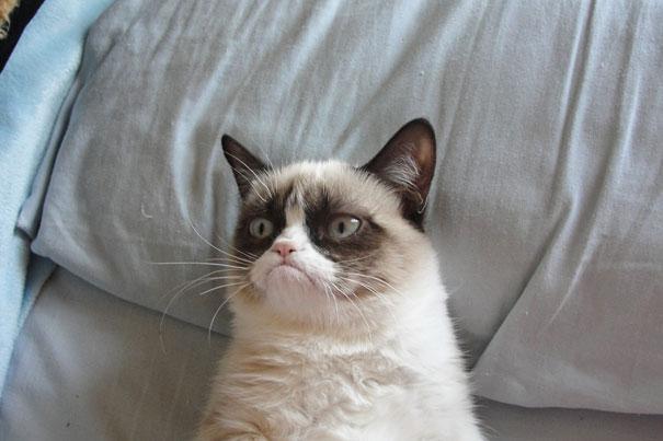 Grumpy Cat-1
