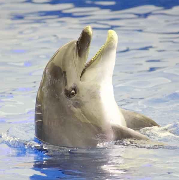 bebe-dauphins-ne-dors-pas