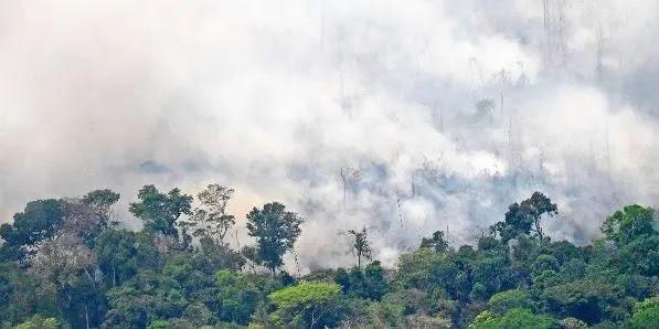 Los incendios en la Amazonía dejarán consecuencias difíciles de dimensionar