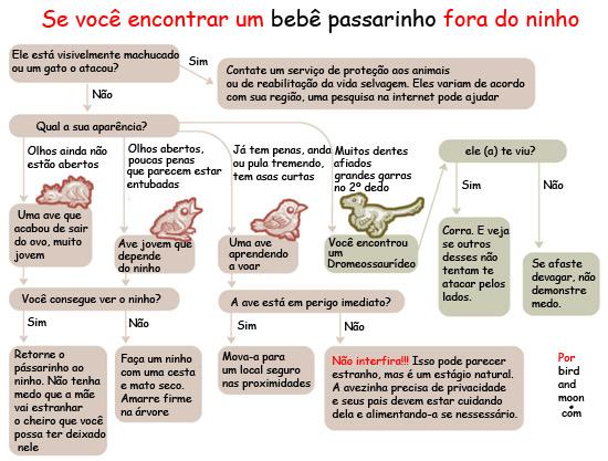 Birdandmoon cartilha do que fazer com passarinho fora do ninho - em português