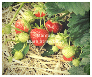 Buah Strawberry yang belum sepenuhnya matang