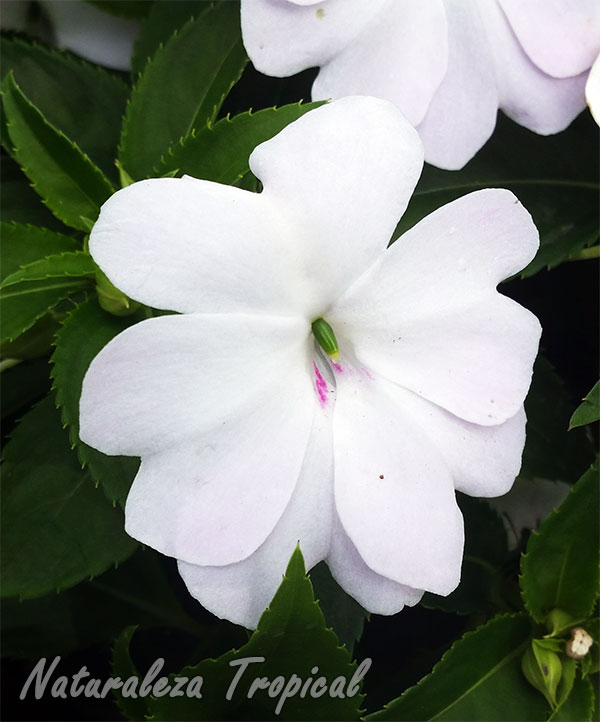 Naturaleza Tropical: 5 géneros de plantas ideales para interiores