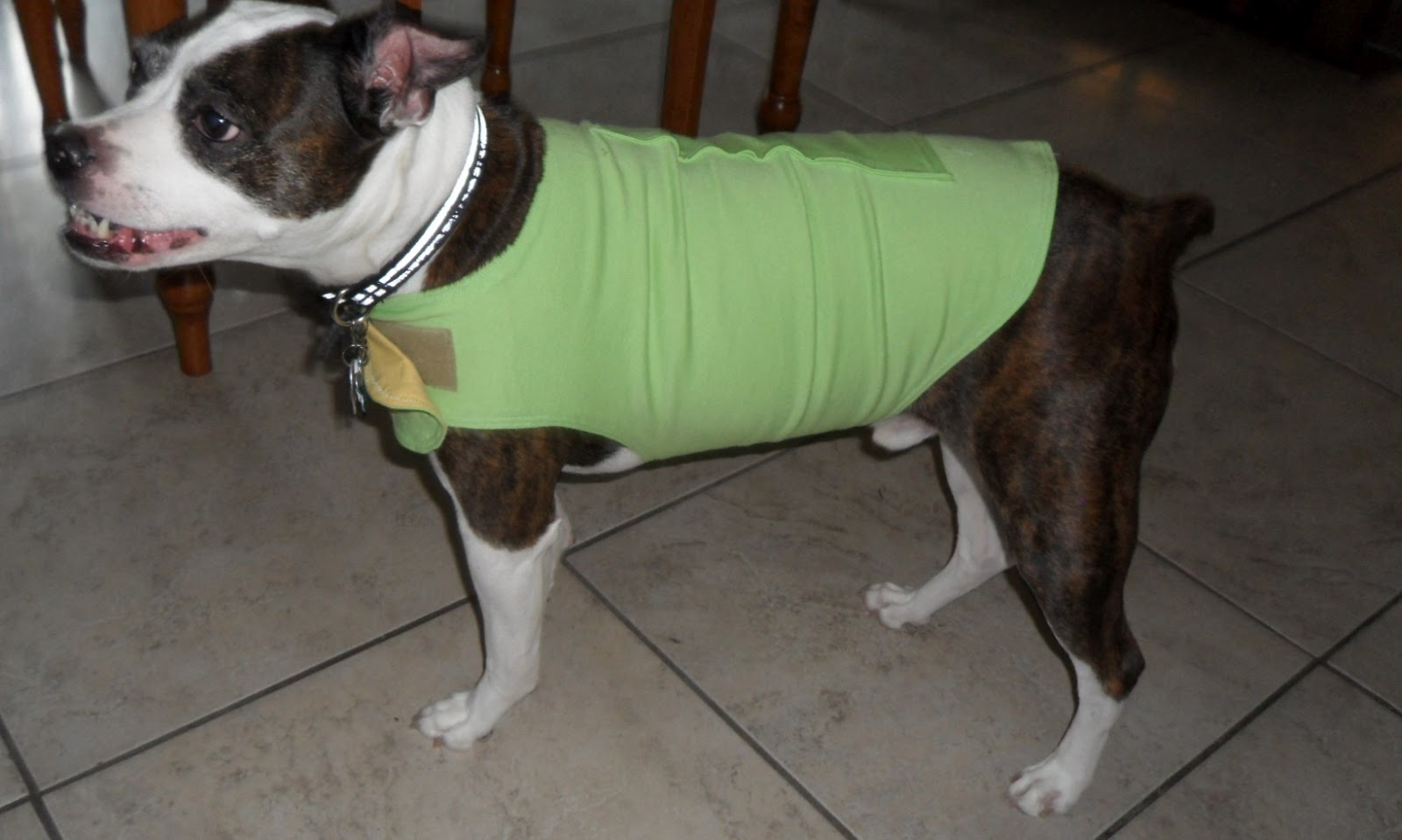 homemade thundershirt for dog