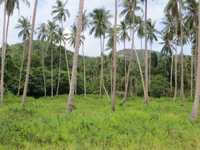 Пальмы в поле