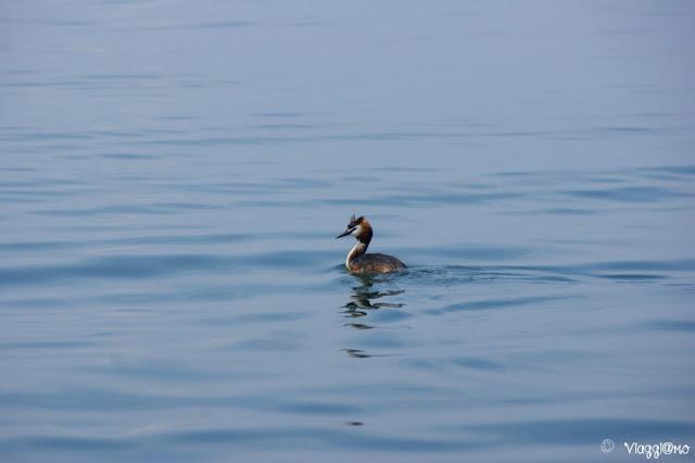 Esempio di fauna del Lago di Garda