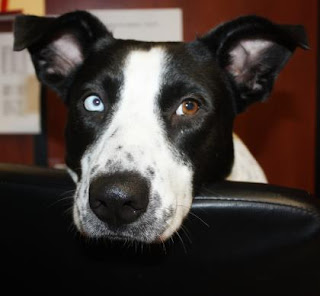 Adoptable dog neida has been waiting for a home for over a year at the Bideawee shelter, New York