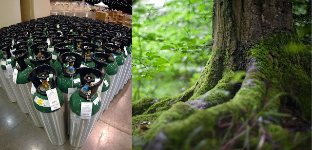 The worth of a healthy tree based on oxygen cylinder prices
