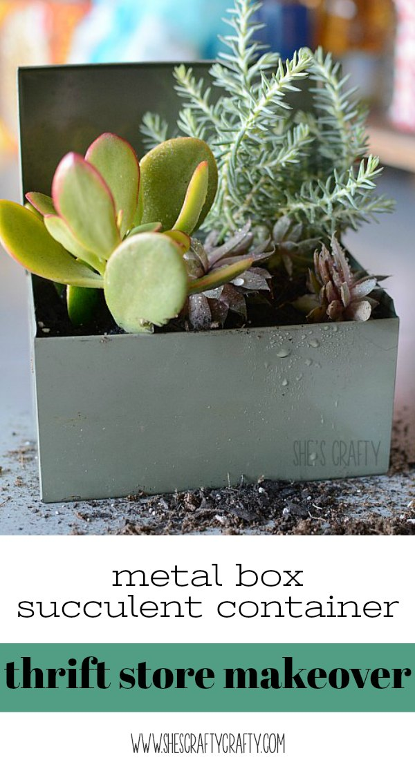 succulent container, succulents, thrift store makeover