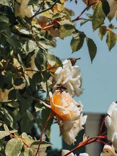 пчели опрашват диви цветя и зеленчукови градини