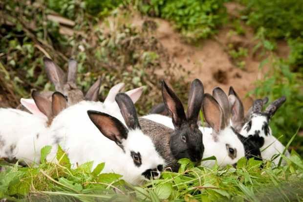 تفسير حلم رؤية الأرانب أو ذبح وسلخ الأرانب في المنام لابن سيرين