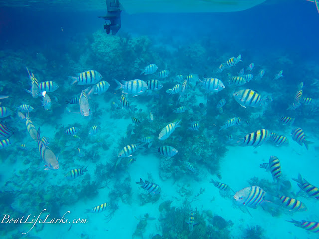 The Aquarium snorkel spot, Bahamas