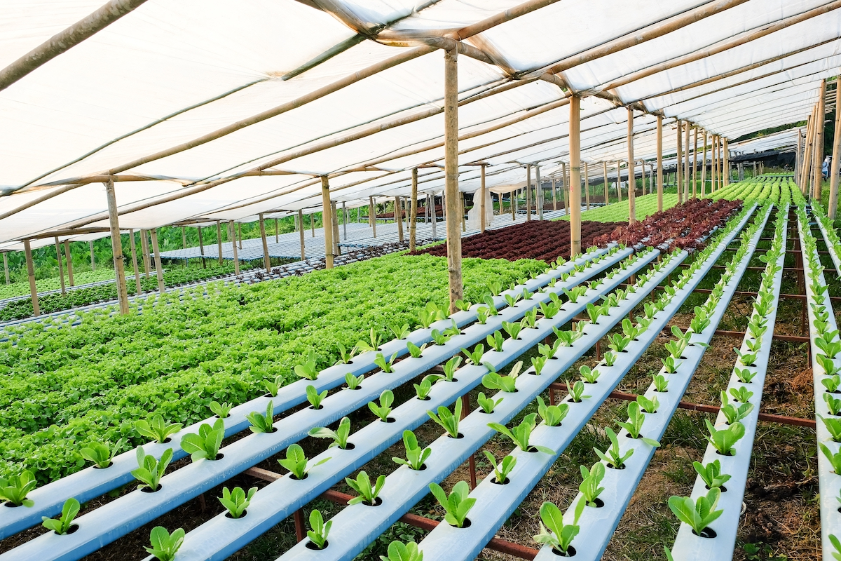 Dubai Food Tech Valley to spearhead innovation in vertical farming, aquaculture and hydroponics