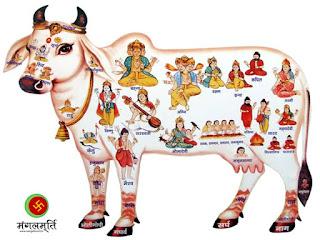gau mata, hinduism, hindu, kaamdhenu maa