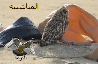 المناشبيه falcon trap