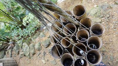 pembuatan menderes gula keristal (semut) organik